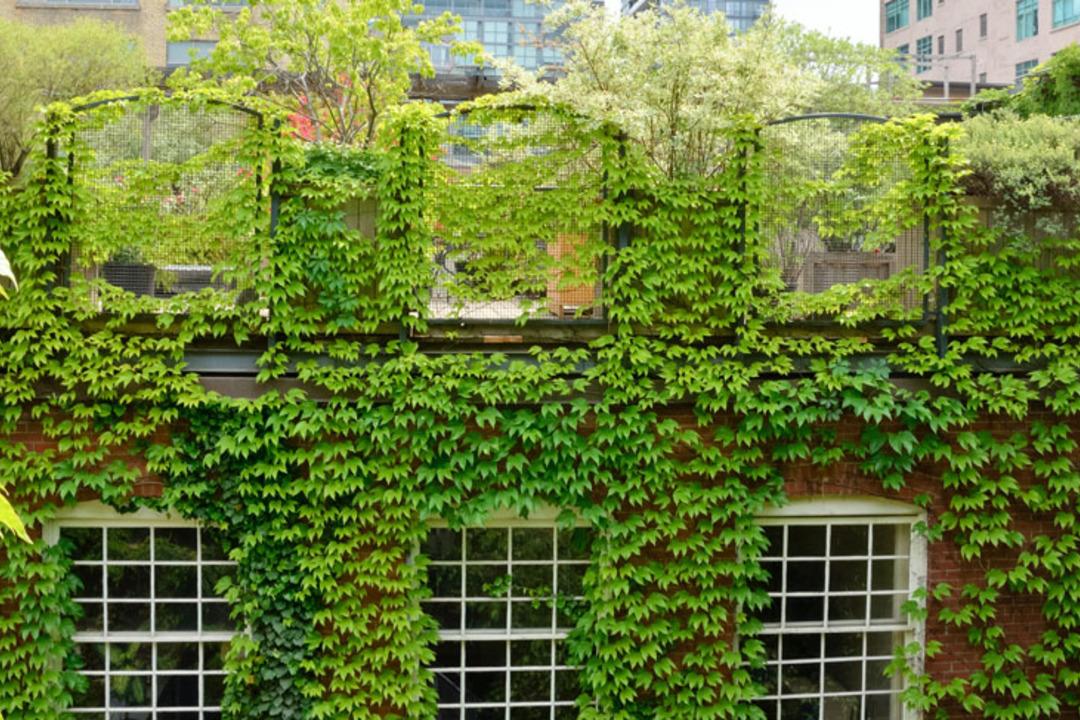 Groene-daken-energievriendelijke-woning.jpg