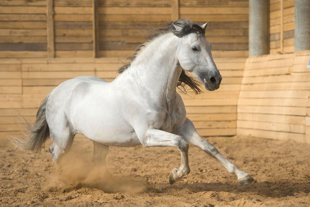 paardenstal1bijgesneden.jpg